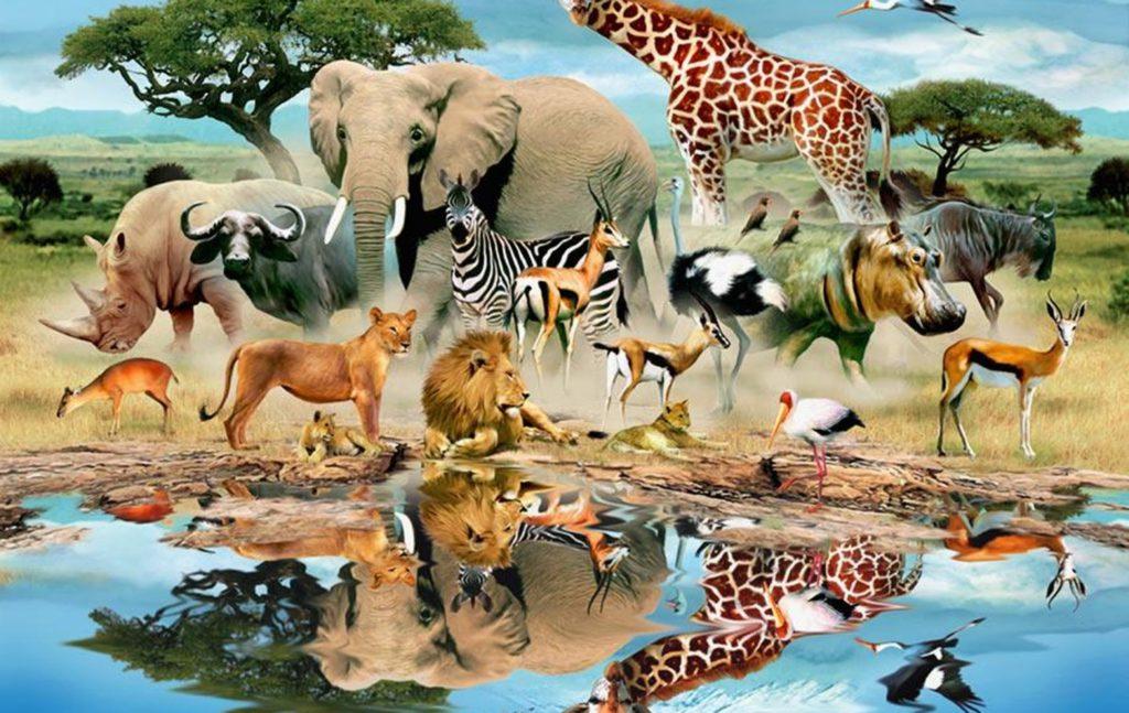 1440x900-watering-hole-wildlife-mural-wallpaper-murals